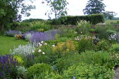 Billowing herbaceous borders which we designed as part of a large redesign for clients in Gloucestershire
