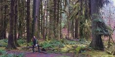 Olympic Peninsula | Hoh Rainforest | Hall of Mosses | Monica Miyagi