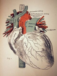 Anatomy of a heart...is it because I'm a nurse I think this is cool?