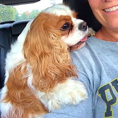 This is Cavalier Teddy, a drive-thru buddy (moved from behind my back!)