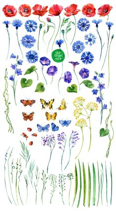 watercolor wildflower by ognivo on @creativemarket