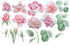 Flowers. Watercolor. by rednex on @creativemarket
