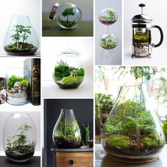 our top tips and recommendations for creating a thriving indoor ecosystem - or terrarium - fit for any space!
