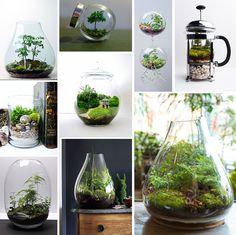 테라륨, 녹색의 식물들이 유리에 담겨있어서 더 눈이가고 예쁘다 새로운 병 디자인 생각해보기