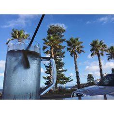 On trinque! #aussie #australia #traveller #blogger #travel #bondibeach #pacificbeach #palmtrees #instadaily #happylife #pacificbeachlocals #sandiegoconnection #sdlocals #sandiegolocals - posted by LIFESTYLE•TRAVELLER  https://www.instagram.com/foxysnoby.