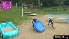 Daily Dose of Love: Summer Puppy Antics Puppy Play, Service Dogs, Gaia, Puppies, Summer, Animals, Clothes, Outfits, Cubs