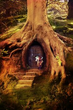 A fantasy fairy door in a tree stump - if only.