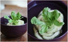 Indoor Gardening Reuse common vegetables such as basil, lettuce, garlic, carrots #nutrition