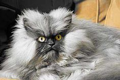 Meet 5 Of The Most Famous Cats On The Internet!: All Hail Colonel Meow!