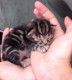 Cutest Kittens that bring smiles Kittens And Puppies, Cute Cats And Kittens, Kittens Cutest, Pretty Cats, Beautiful Cats, Animals Beautiful, Cute Baby Animals, Animals And Pets, Funny Animals