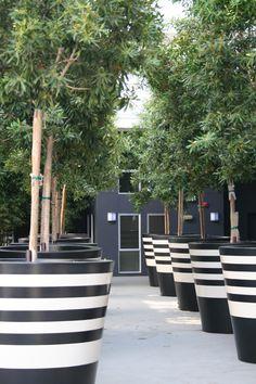 Black & White: striped planters