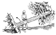 Understanding The Hazards of Felling Storm-Damaged Trees Tree Removal Service, Tree Felling, Removal Services, Sales And Marketing, Firewood, Woods, How To Remove, Trees, Camping
