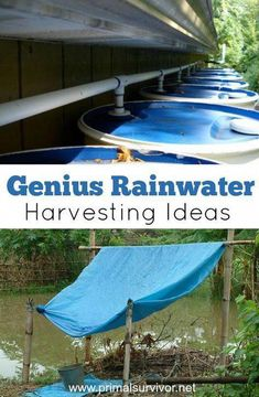 Genius Rainwater Harvesting Ideas for Survival Situations. But going from 100 gallons to 2 gallons per day is going to be a big change. You'll probably end up using more than you realize, and soon your precious stockpile of water will be gone. So you wi Survival Supplies, Survival Food, Emergency Preparedness, Emergency Supplies, Survival Shelter, Homestead Survival, Urban Survival, Survival Tips, Survival Skills