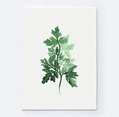 Herbs Bouquet Print Kitchen Art Botanical Parsley Sage Rosemary And Thyme Mothers Day Valentine Watercolor Green Pinterest Herb