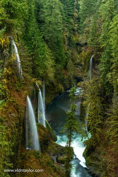 Eagle Creek Trail, Oregon, US by Vldn Taylor