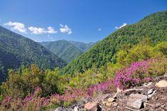 Bosque de Muniellos (Asturias)