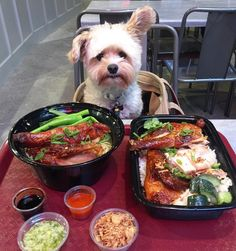 """10.3k Likes, 158 Comments - Popeye the Foodie Dog  (@popeyethefoodie) on Instagram: """"He thought side chick meant something else.  Roasted chicken noodle soup and over garlic rice at…"""""""