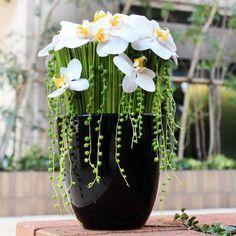 ぜいたく胡蝶蘭の「アクセサリー」アレンジ |花・フラワーギフトならケイフローリストデザイン。即日配送も可能!
