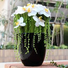 .Phal orchids, reed grass and Mother of pearl in simple black ceramic
