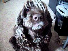 Keno The Wonder Dog