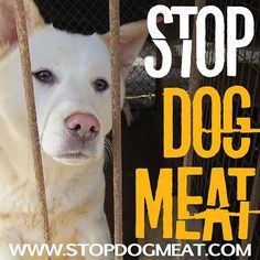 Stop the madness. Pass it on. #stopdogmeat #dogs #puppies #goveg #govegan #doglovers #animalrights #friendsnotfood