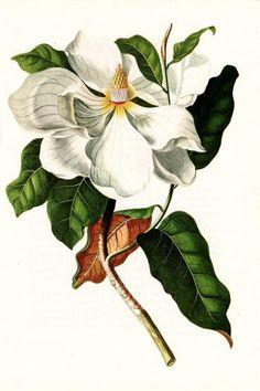 http://wordplay.hubpages.com/hub/vintage-flowers