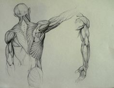 Anatomy Study by Kimsuyeong81.deviantart.com on @deviantART