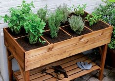 If space is an issue the answer is to use garden boxes. In this article we will show you how all about making raised garden boxes the easy way. We all want to make our gardens look beautiful and more appealing. Raised Herb Garden, Herb Garden Planter, Herb Planters, Vegetable Garden, Herbs Garden, Vegetable Planter Boxes, Planters Flowers, Herb Garden Design, Outdoor Planters