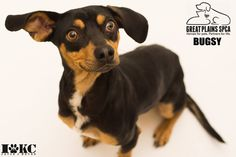Why are Savage vinyl backgrounds the best backdrops for pet photography?