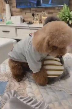 Cute Baby Dogs, Cute Funny Dogs, Cute Dogs And Puppies, Cute Funny Animals, Cute Cats, Cute Babies, Cute Funny Baby Videos, Baby Animals Pictures, Cute Animal Pictures