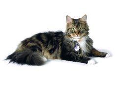 ASPCA   General Cat Care
