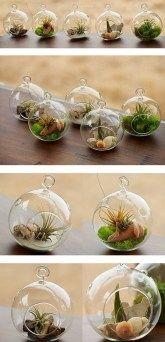 Air Plant Terrariums 10 Great Ideas