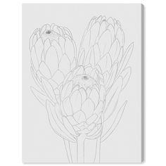 The Oliver Gal Protea Canvas Wall Art features the drawn outline of protea flowers, emphasizing their complex forms and creating an intriguing accent. Flor Protea, Protea Art, Protea Flower, Canvas Wall Art, Wall Art Prints, Canvas Prints, Flower Sketches, Botanical Wall Art, Thing 1
