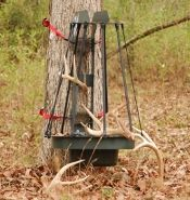 Whitetail Woods: How to Make a Shed Antler Trap