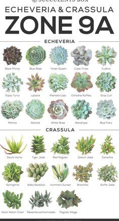 Landscaping types of succulents, succulents garden, senecio . Perennials Fabric, Full Sun Perennials, Shade Perennials, Flowers Perennials, Types Of Succulents Plants, Paper Succulents, Planting Succulents, Propagate Succulents, Succulent Gardening