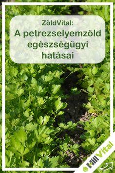 Health Fitness, Herbs, Gardening, Blog, Garten, Herb, Blogging, Health And Fitness, Lawn And Garden