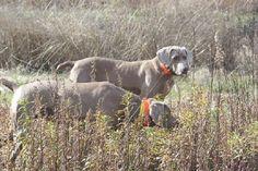 At Black Creek Plantation, you can enjoy bobwhite quail hunting in ...