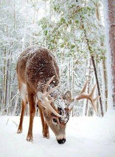 #Navidad #Animales #Reno #magazinefeed