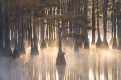 Misty morning amoung the cypress trees (southeastern USA) by Exploring Light on 500px