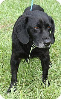 Prattville, AL - Labrador Retriever Mix. Meet Durbin 27094, a dog for adoption. http://www.adoptapet.com/pet/18814519-prattville-alabama-labrador-retriever-mix