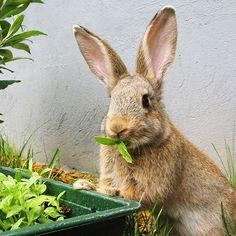 Ummm, ummm ummm I really  love your young and tender organics