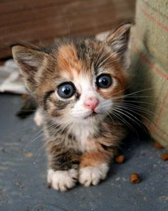 I think this little fella has just won the cutest kitten of the day award!