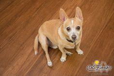 Kozmo Dog on Java Bamboo Flooring