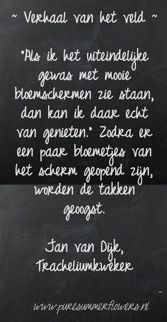 Kort verhaal over zomerbloemen. Quote Tracheliumkweker.     This quote courtesy of @Pinstamatic (http://pinstamatic.com)