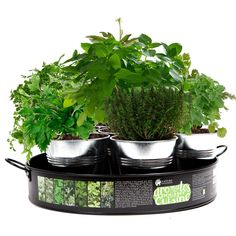 Plateau de 7 aromates à cultiver - Des aromates frais à portée de main, dans la cuisine ! - 29,95 €