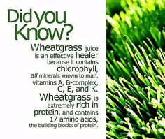 Wheatgrass contains 17 amino acids, is very rich in protein, contains all known minerals, and is a great healer due to it's high concentration or Chlorophyll Health And Nutrition, Health Tips, Health And Wellness, Nutrition Data, Fitness Nutrition, Wellness Tips, Mental Health, Health Care, Natural Health Remedies