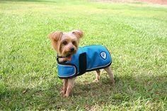 Kensington KD533PC-XXXLTL Dog Coat, 3X-Large >>> Awesome dog product. Click the image : Dog coats
