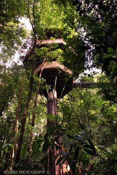 Spectacular tree houses... Trevor and I we're in this amazing costa ricon tree house village for our honeymoon