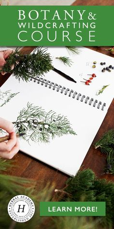 Botany & Wildcrafting Short Course | Herbal Academy | Whether you are foraging for wild dandelion greens, reading a plant identification book, or experiencing herbs directly through using them — our Botany & Wildcrafting Short Course pulls all of these learning experiences together into one nice, neat little package for you. Join us today! https://theherbalacademy.com/product/botany-wildcrafting-course/