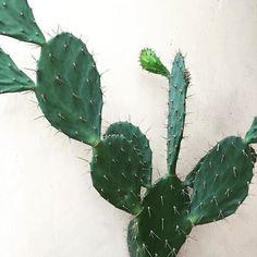 bali cactus finds.. T x #hopeandmaytravel by hopeandmay